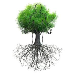 tree functional medicine Functional Medicine tree 292x300