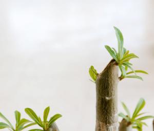 What Does Regenerative Medicine Offer?